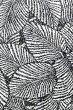 画像3: ポリコットン総柄(リーフ柄/ブラック・ホワイト) (3)